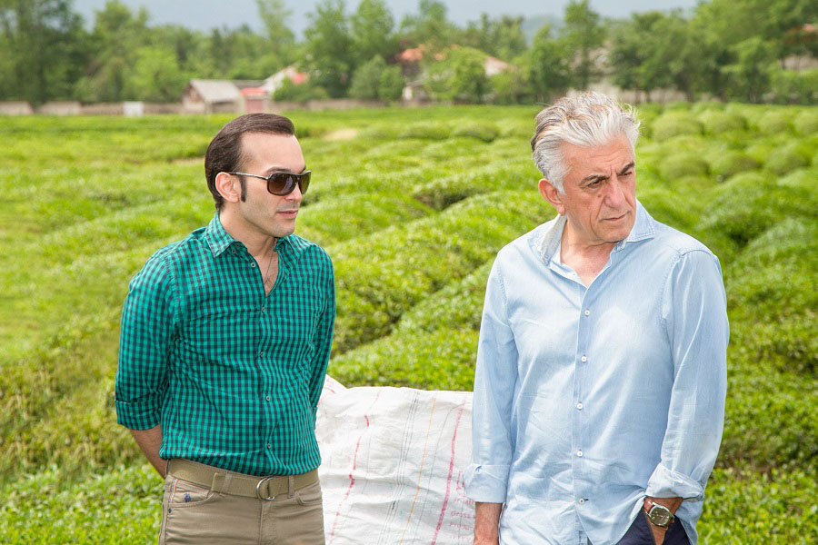 مزرعه چای دمنوش نیوشا