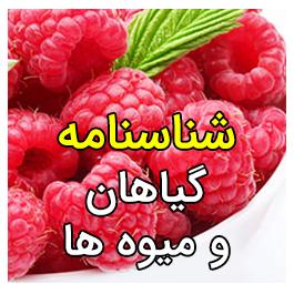گیاهان و میوه ها